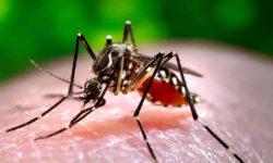 डेंगू Dengue: लक्षण, कारण , इलाज और बचाव